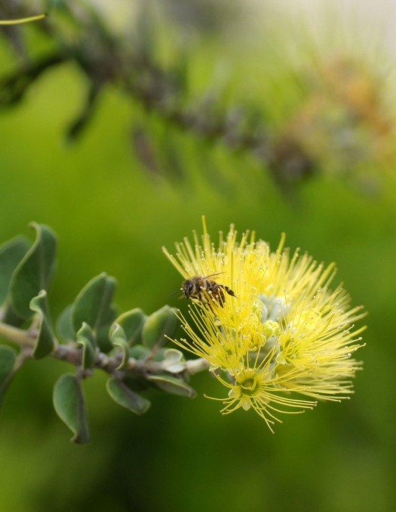 061912-summer-solstice-bee-on-flower